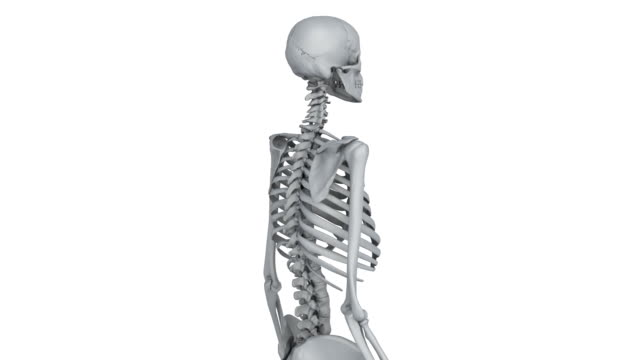 skeleton model A model of human skeleton isolated on white with matte animal skeleton stock videos & royalty-free footage