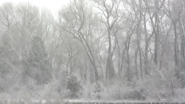 Skeleton Trees in Blizzard video