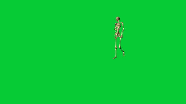 skeleton walking - separate on green screen 3d animation of skeleton walking - separate on green screen animal skeleton stock videos & royalty-free footage