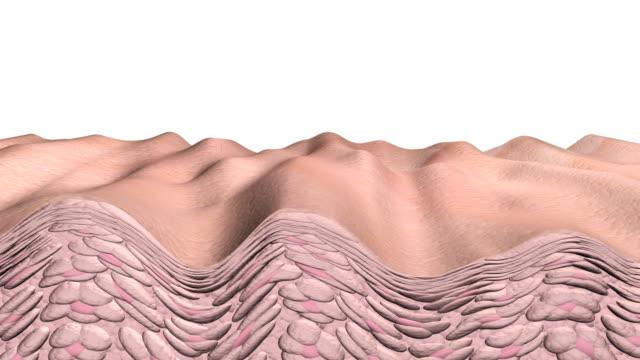 Skin Aging video