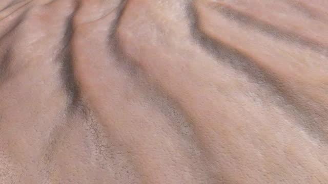 мятое поверхности кожи - морщинистый стоковые видео и кадры b-roll