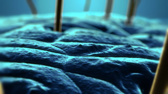 Skin under microscope version 03 Coloured SEM (Scanning electron microscope) image of skin with hair. human hair stock videos & royalty-free footage