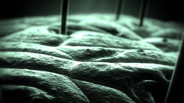 Die Haut unter Mikroskop version 4 – Video