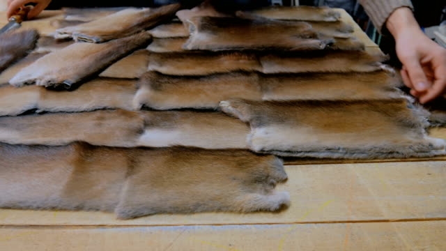 Skinner working with mink fur skin Professional male skinner, furrier matching colours of mink fur skin at atelier, workshop. Fashion and leatherwork concept fur stock videos & royalty-free footage