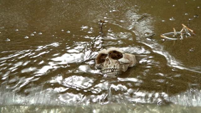 vidéos et rushes de crâne sur le bord de la mer, la rivière est baignée par les vagues - desastre natural