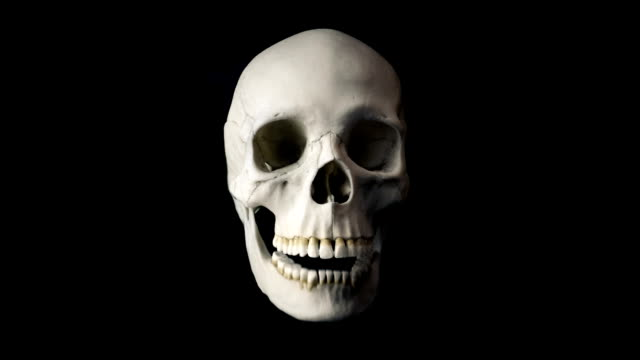 Skull Talking Loop - Front View Front view of human skull talking on black background - Looped for endless playback skull stock videos & royalty-free footage