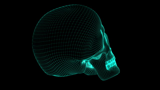 Skull Skull. Looping. wire frame model stock videos & royalty-free footage