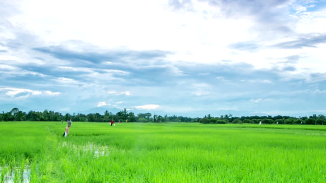 sky moving over paddy field with scarecrow ,time lapse video