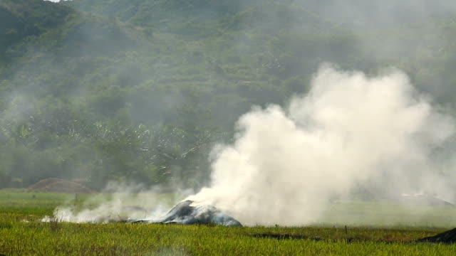 Slash and burn rice field in Asia video