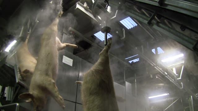 Slaughterhouse for pigs