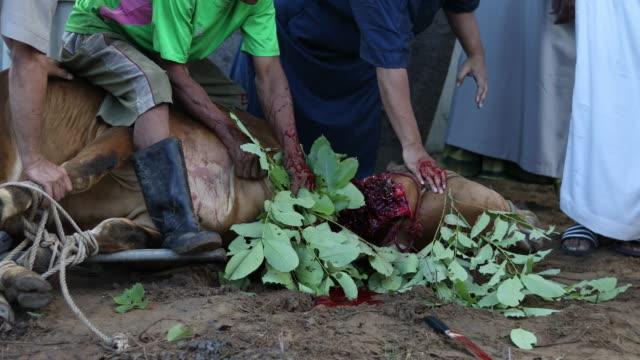 vídeos y material grabado en eventos de stock de trabajadores del matadero - eid mubarak