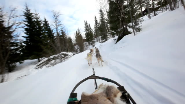 Sled dog video