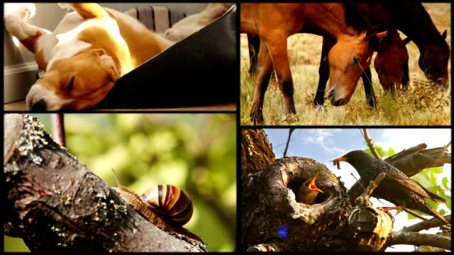 Sleeping beagle, hoses,snail and starling family collage footage video