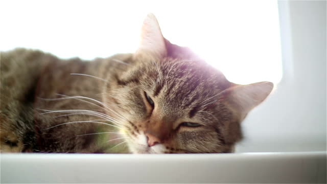 Sleeping cat muzzle. Lazy cat is lying on the windowsill. Close up. tabby cat stock videos & royalty-free footage