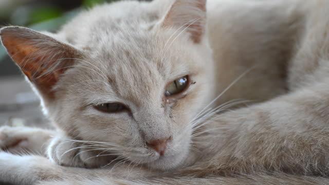 vídeos y material grabado en eventos de stock de dormitorio cat. - vibrisas