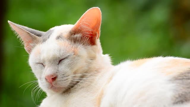 vídeos y material grabado en eventos de stock de dormitorio de gato - vibrisas