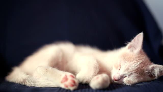 sleeping cat - kociak filmów i materiałów b-roll