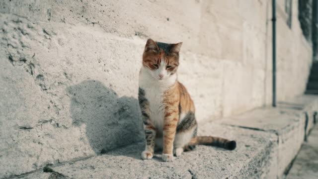 眠い猫はちょうど目を覚まし、晴れた冬の日にトルコのイスタンブールのモスクの壁の隣で休んだ - 壁点の映像素材/bロール