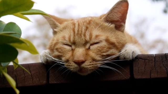 vídeos y material grabado en eventos de stock de sleepy poco gatos - vibrisas