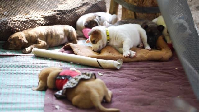 Sleepy little dogs