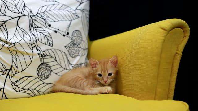 スリープ - 子猫点の映像素材/bロール