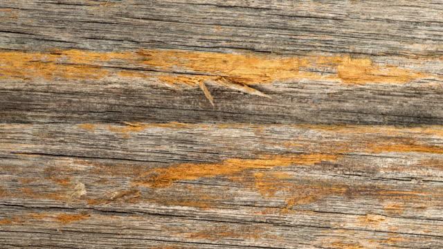 slide shot of wood texture
