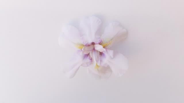 slide show of the summer flowers