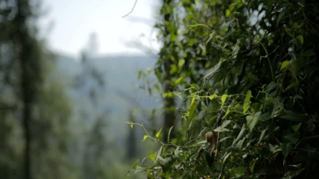 слайдер снимок of green hills с лесами - дубовый лес стоковые видео и кадры b-roll