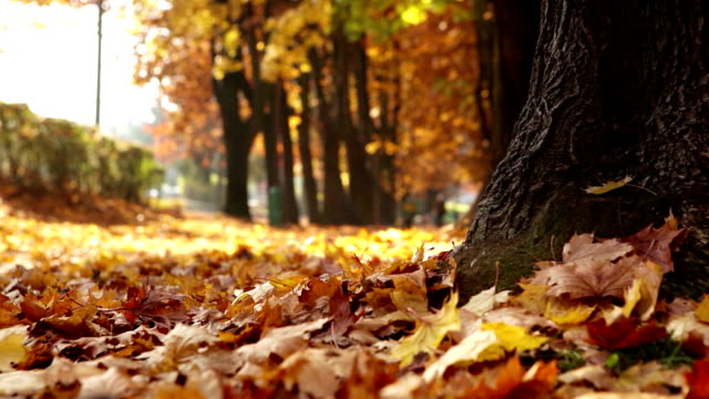 vídeos y material grabado en eventos de stock de deslizamiento de la vista de la cámara: mujer corre en el parque otoño - sudadera