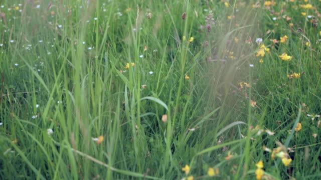 vídeos de stock e filmes b-roll de sliding over grass and wildflowers - granadilha