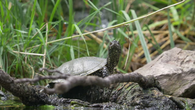 A slightly moving footage of a turtle enjoying and watching the environment