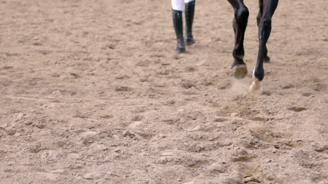 smal atletisk kvinna med lockigt hår drar ut på en löpande cirkel. brun häst. gul sand flyger ut från under huven. vård av tamdjur. slowmotion-hd - hästhoppning bildbanksvideor och videomaterial från bakom kulisserna