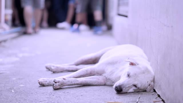 slo mo Dog sleep video