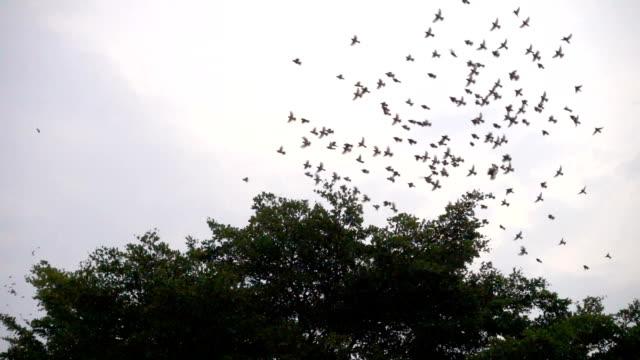 slomo-birds flying around a tree - battere le ali video stock e b–roll