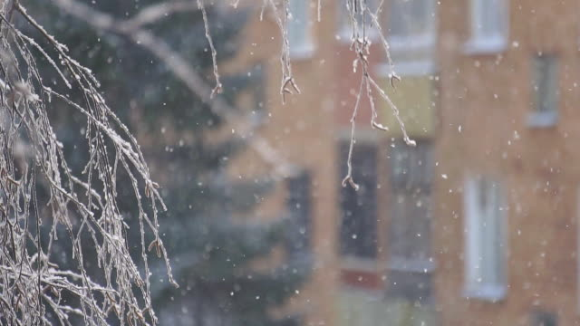 Slow falling snow video