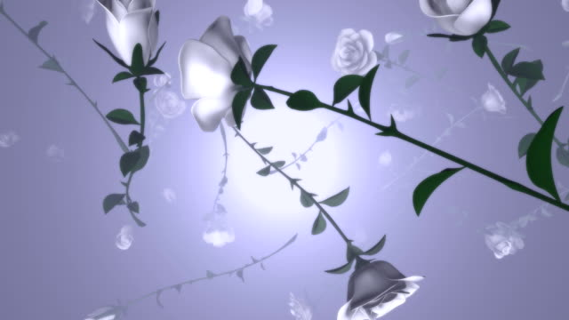 långsamt sjunkande vita rosor (loopable) - white roses bildbanksvideor och videomaterial från bakom kulisserna