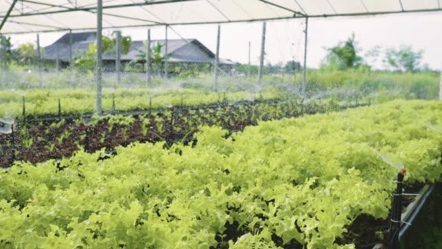 Slow mo : Agricultural Water Sprinklers Watering Farm Plants Crop Field