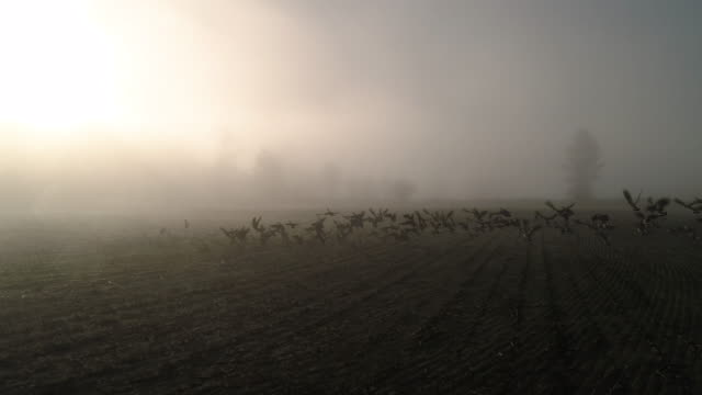 Slow Motion Aerial of Geese Flying in Sunny Fog Haze Over Farm Field Canadian goose flock taking flight to migrate in low hazy fog clouds high dynamic range imaging stock videos & royalty-free footage