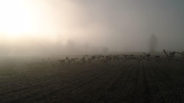 slow motion-antenn av gäss som flyger i soliga dimma dis över gården fält - high dynamic range imaging bildbanksvideor och videomaterial från bakom kulisserna