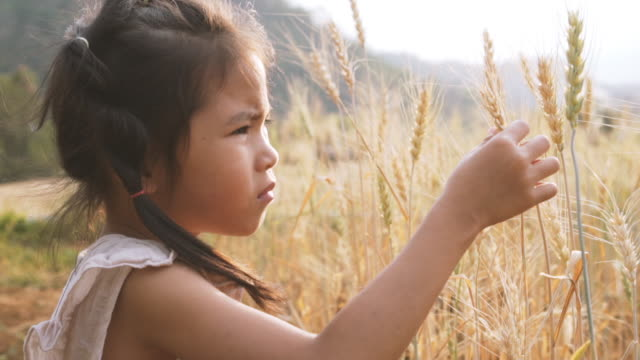 slow motion ; asian little girl touches the ears of wheat in doubt on the field - attività agricola video stock e b–roll