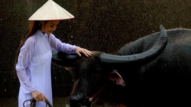 Slow Motion Beautiful Woman Touching Water Buffalo In The Rain
