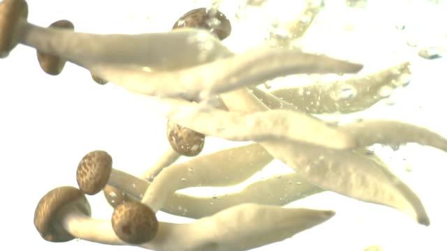 Slow Motion Brown Shimeji Mushroom Drop in Water on White Background 4 Slow Motion Brown Shimeji Mushroom Drop in Water on White Background. Brown Shimeji Mushroom healthy or super food hi resolution footage full HD 1920x1080 for food category {{asset.href}} stock videos & royalty-free footage