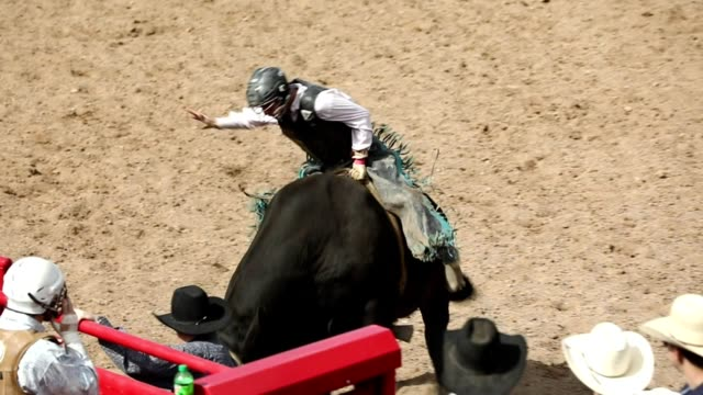 slow motion bull ride rodeo arena - animale femmina video stock e b–roll