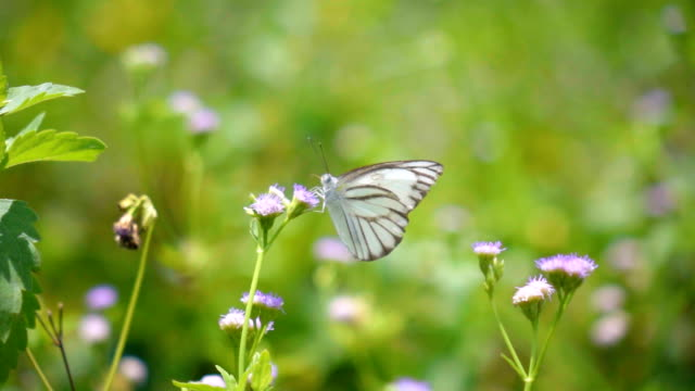 Slow motion Butterfly on flower