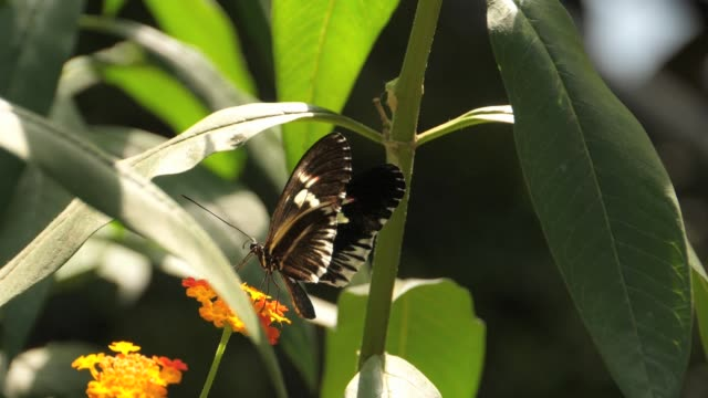 Slow motion butterfly video