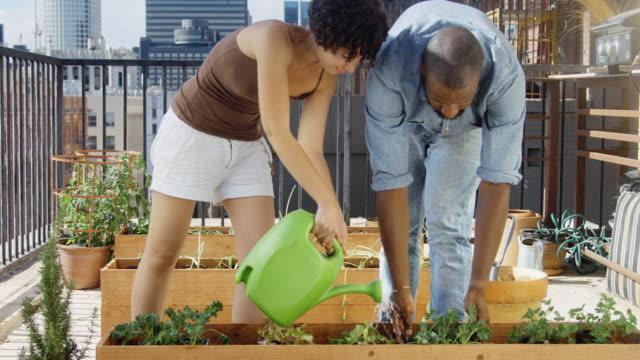 slow motion-clip der städtischen gärtner pflanzen gießen - dachgarten videos stock-videos und b-roll-filmmaterial