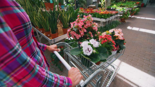 vídeos de stock e filmes b-roll de slow motion close up of an young woman with cart is choosing fresh seasonal flowers to buy for her garden in plant shop greenhouse in a sunny day - liga desportiva