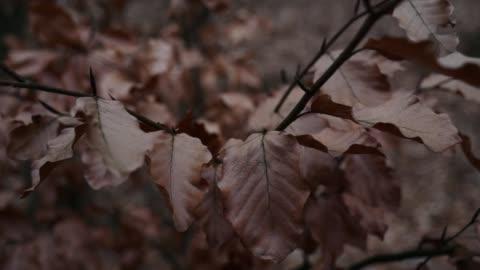 vídeos de stock e filmes b-roll de slow motion close up of autumnal leaves - castanho