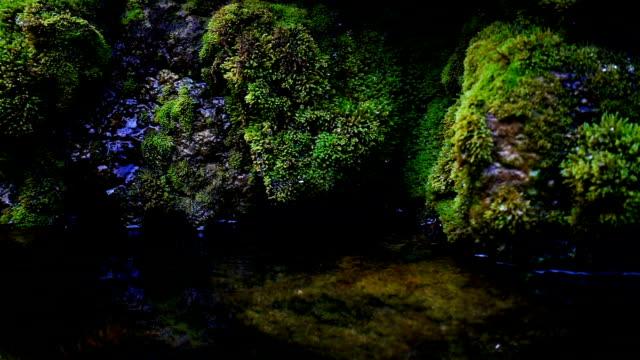 滝のスプラッシュ、それが落ちて、緑の苔で覆われた岩の上にドリブルとして湧き水のスローモーションクローズアップ - 湧水点の映像素材/bロール