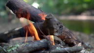 istock HD Slow motion close up shot of burning flames firewood bonfire in forest near the stream. Adventure camping and hiking trip travel concept. 1179918369